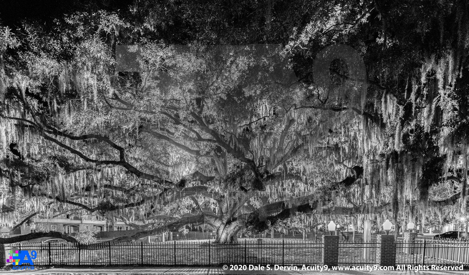 """Baranoff Oak at Night 4-27-2019""  Monochrome"