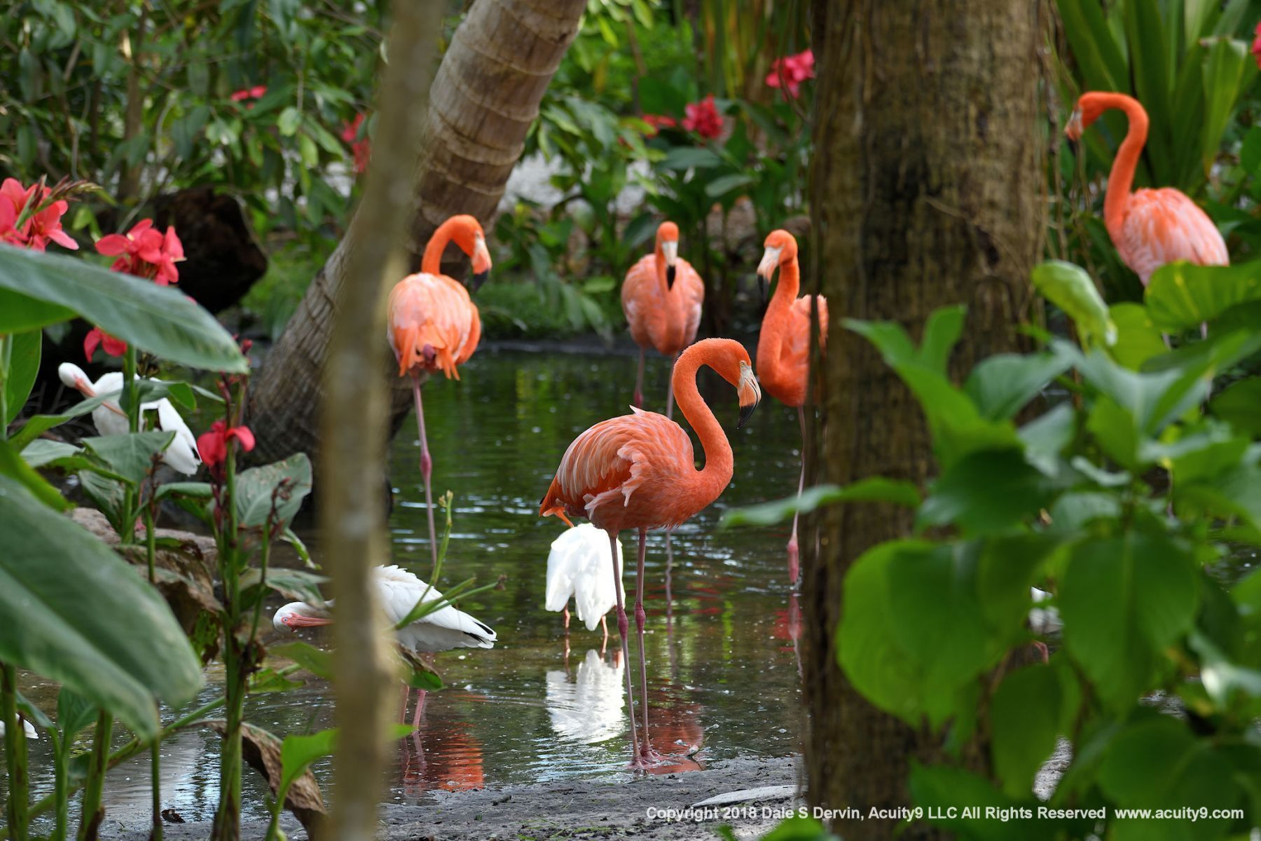 Everglades Wonder Park, Bonita Springs, Florida