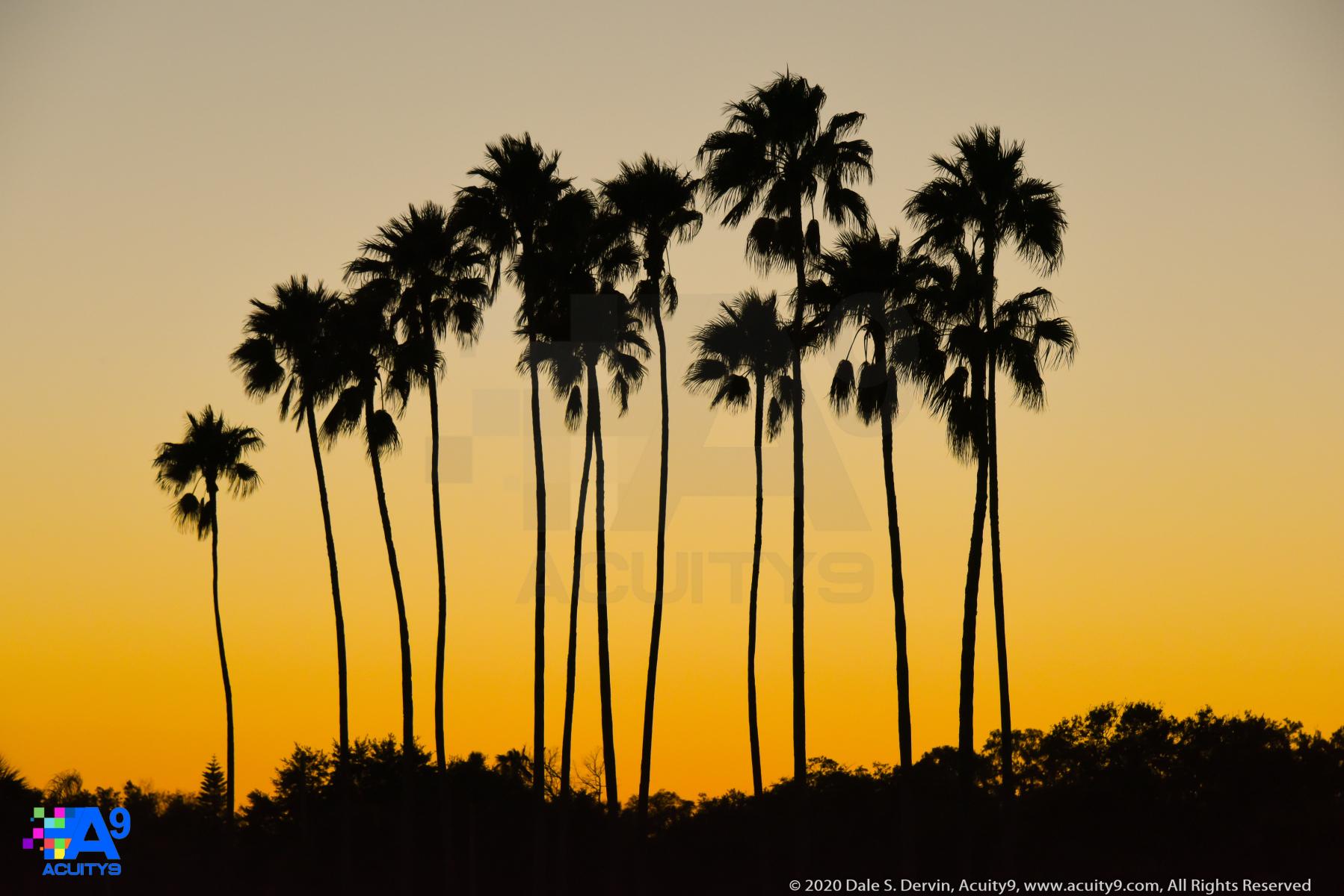 Palms at Sunset, Safety Harbor, Florida